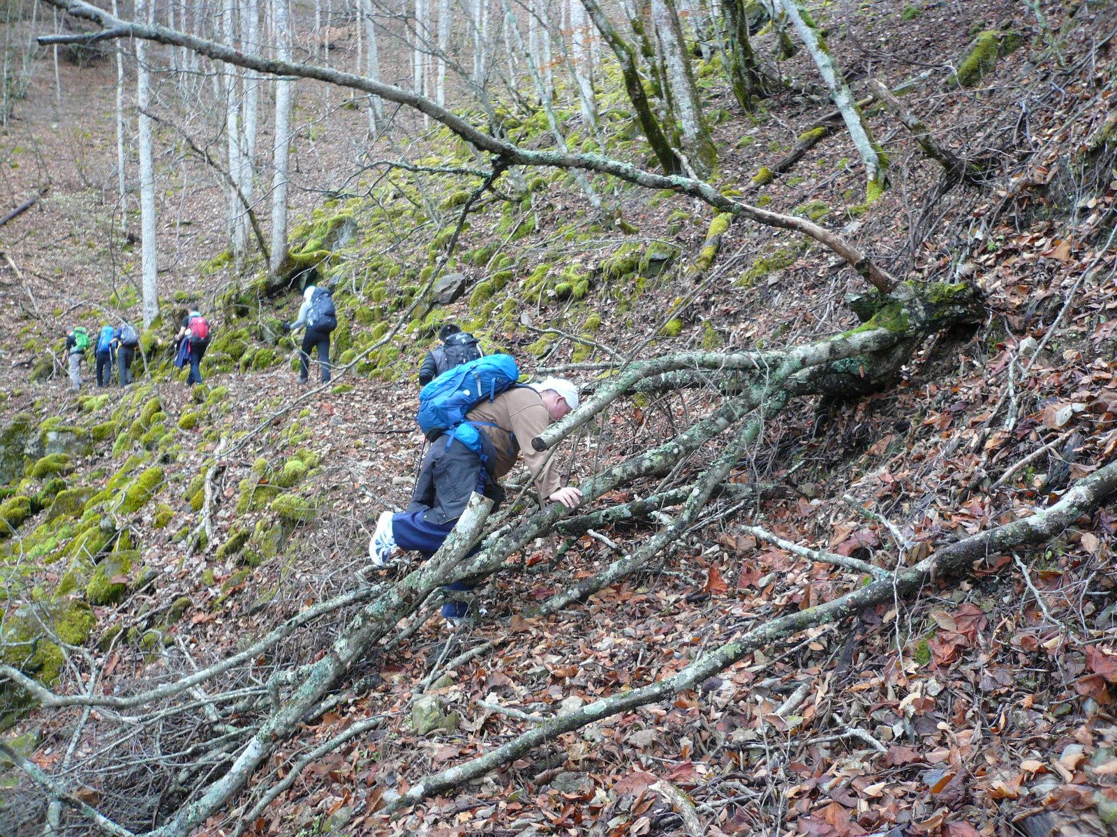 山道の道を塞ぐ倒木
