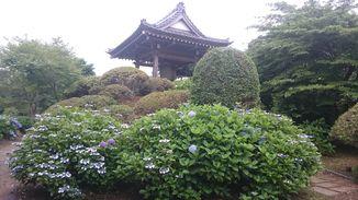 光徳寺 写真3