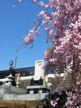 本念寺 写真3