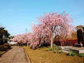 本念寺 写真4