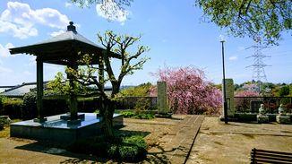 本念寺 写真5
